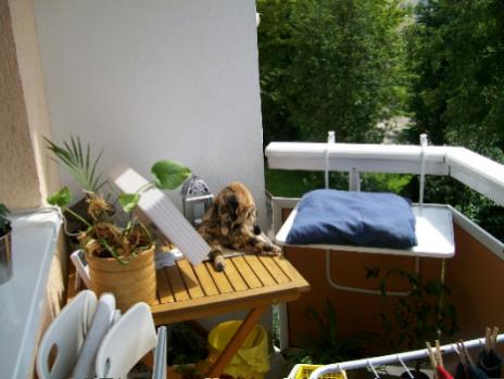 pf tchenverein dessau e v forum unsere lady. Black Bedroom Furniture Sets. Home Design Ideas